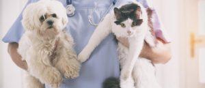 pes kočka a doktor